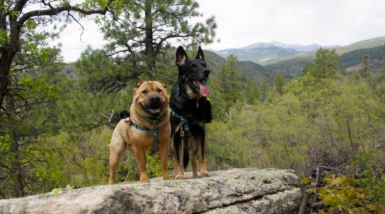 Ty and Buster - Dalla Mountain - Durango, CO