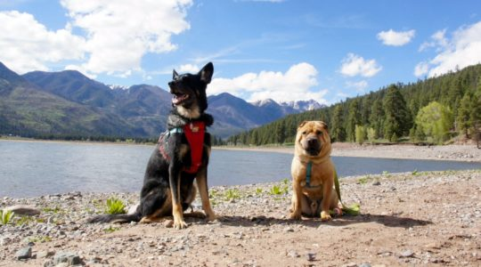 Buster and Ty - Vallecito Lake, CO