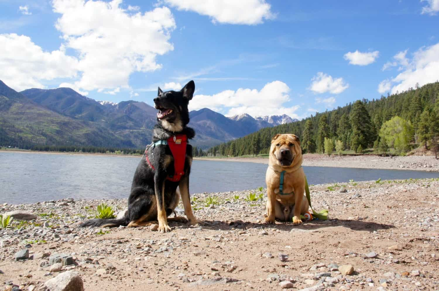Dog Friendly Day Trips From Durango