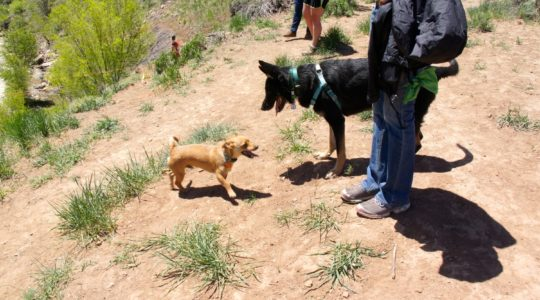 Durango Dog Park - Durango, CO