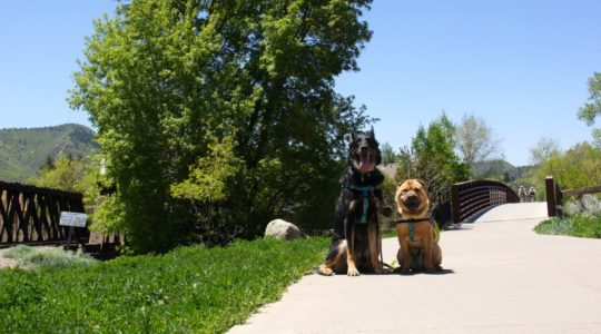 Buster and Ty - Animas River Trail - Durango, CO