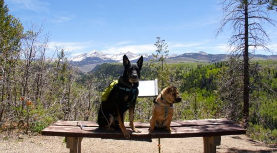 Buster and Ty in San Juan National Forest - Mancos, CO