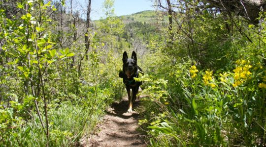 Buster in San Juan National Forest - Mancos, CO