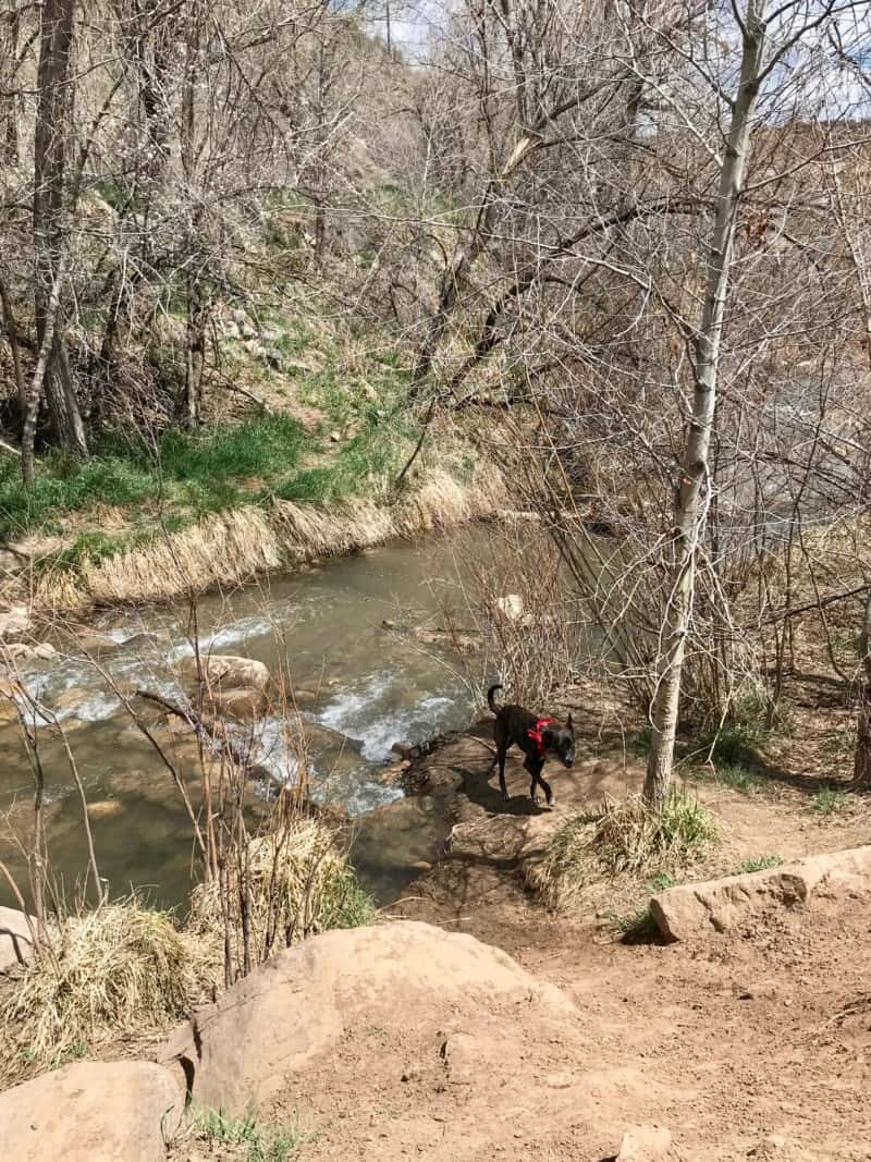 Dog near the creek at the dog park in Durango, CO