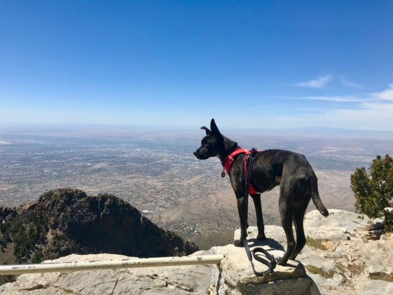Dog Friendly Things To Do In Albuquerque