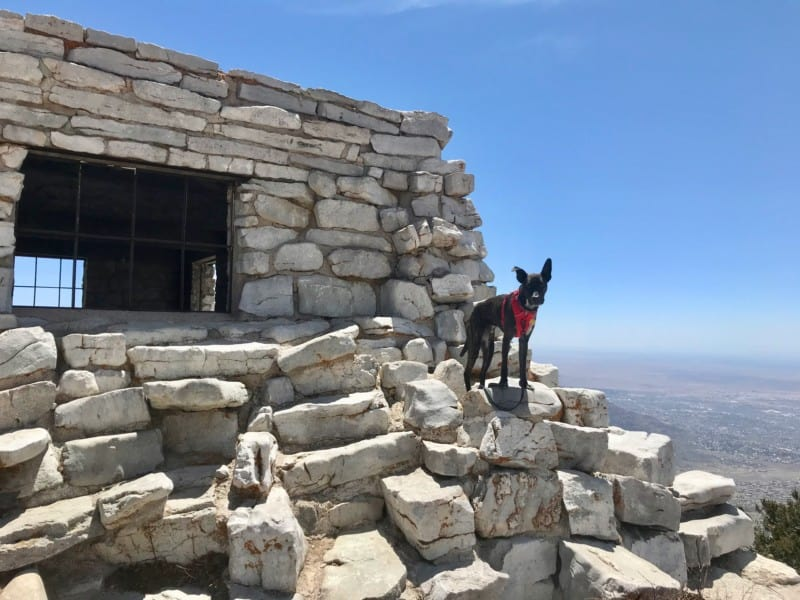 Dog at Kiwanis Cabin overlooking Albuquerque, NM