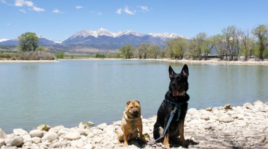 Ty and Buster at Franz Lake  - Salida, CO
