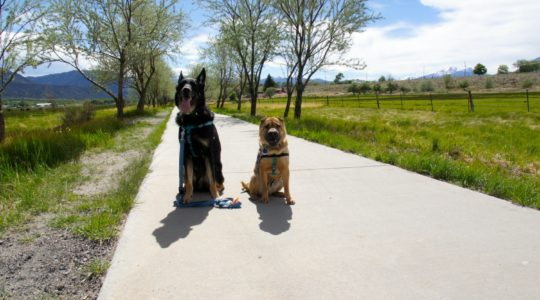 Buster and Ty - Salida, CO