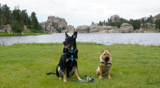 Buster and Ty at Sylvan Lake - Custer, SD