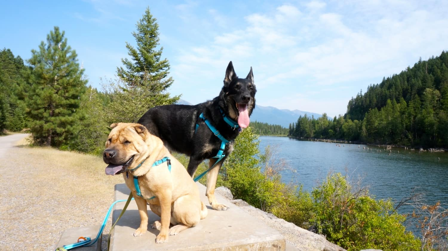 Ty and Buster on Swan River Trail - Bigfork, MT