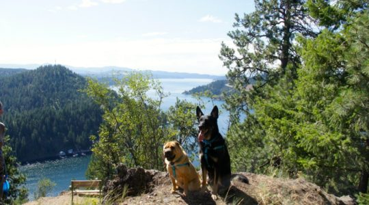 Ty and Buster at Lake Coeur d'Alene, ID