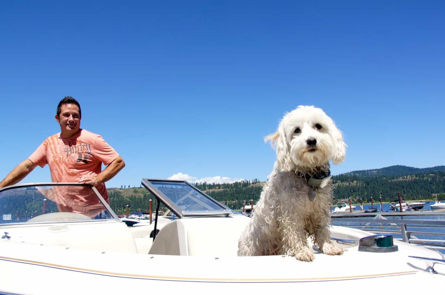 White dog on powerboat in Harrison, ID
