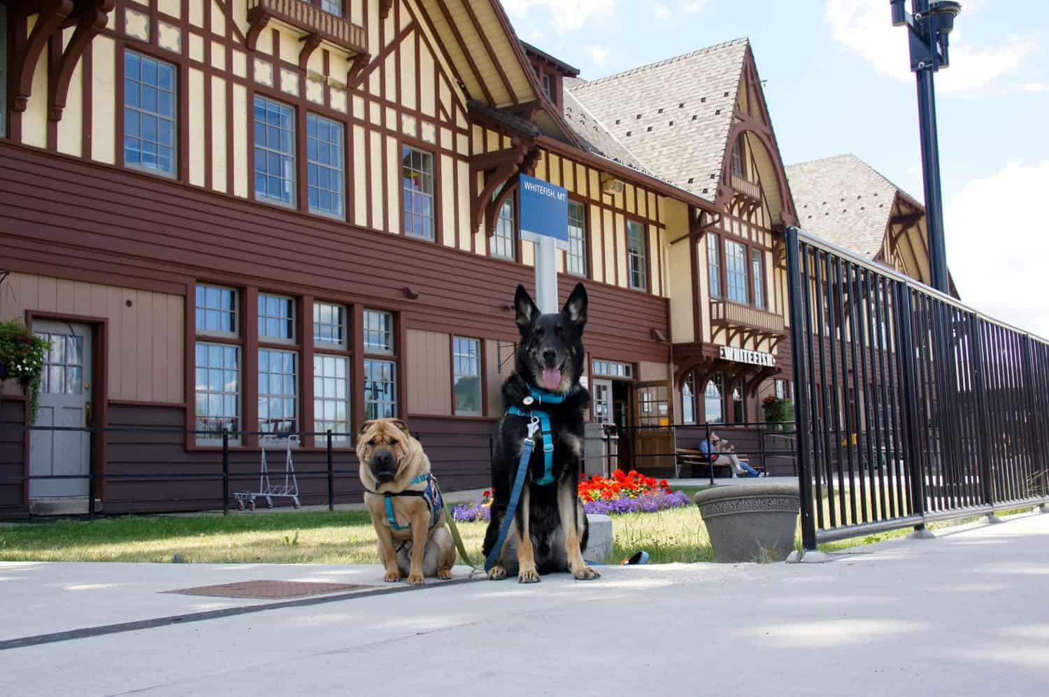 Ty and Buster in Whitefish, MT