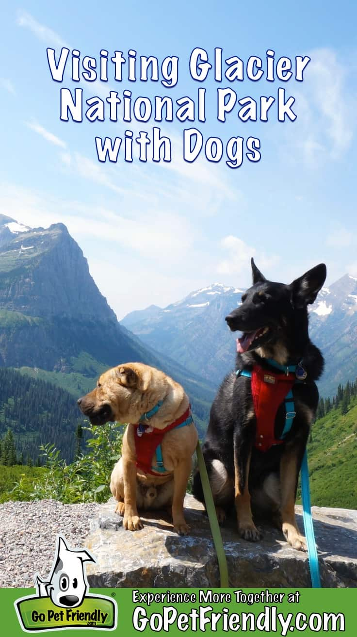 Ty and Buster, the GoPetFriendly.com dogs, at Glacier National Park