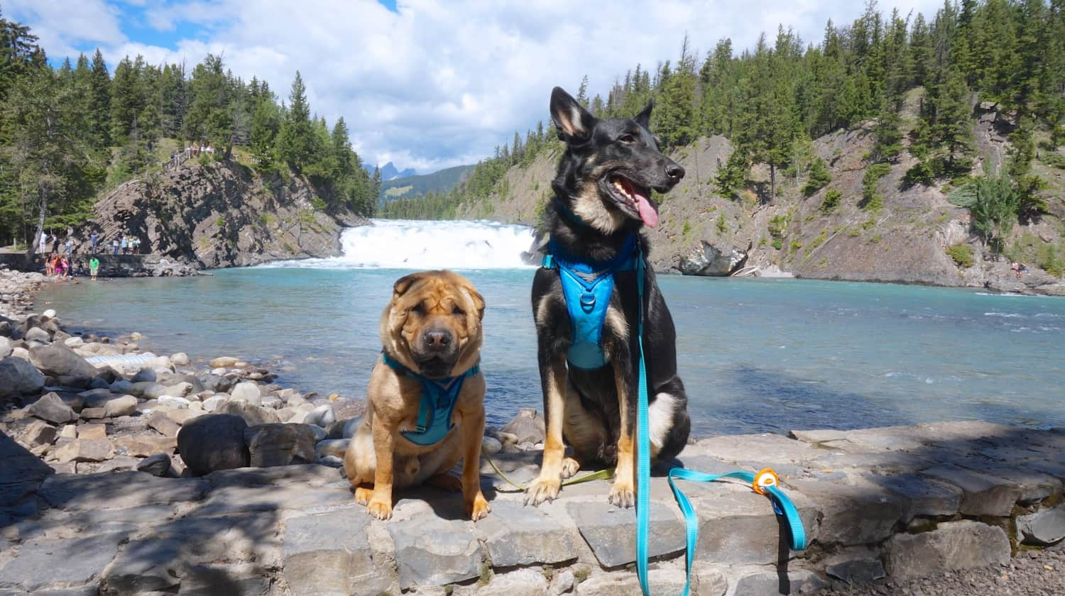 Ty and Buster at Bow Falls - Banff, AB
