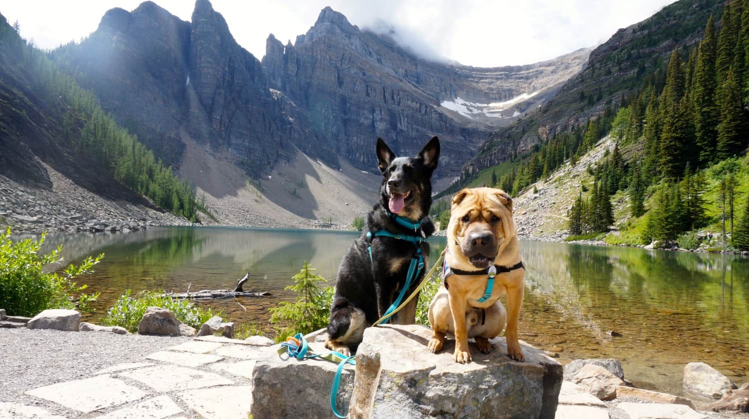 Ty and Buster from GoPetFriendly.com sitting on rocks at Lake Agnes near Lake Louise, AB, Canada