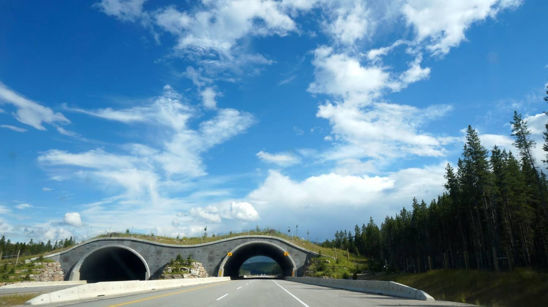 Wildlife Bridge - Lake Louise, AB