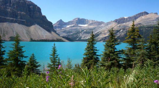 Bow Lake - Alberta