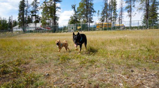 Off-leash Dog Park - Jasper, AB