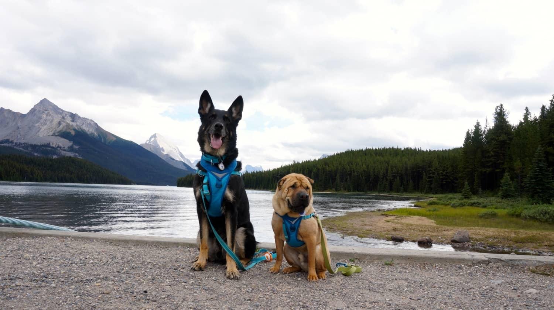 Journey to Dog Friendly Jasper