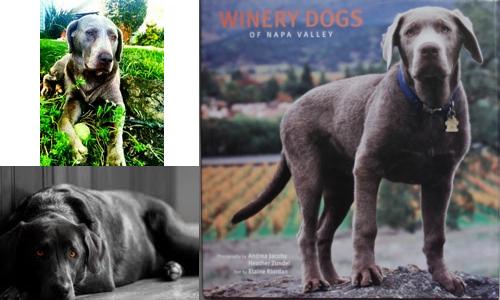 Tyson Scheumann's Dogs