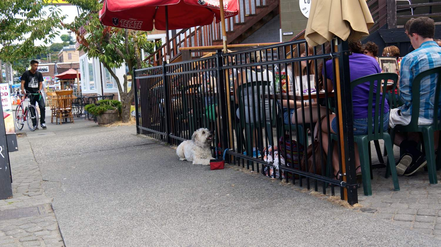 How Pet Friendly West Seattle Stole Our Hearts
