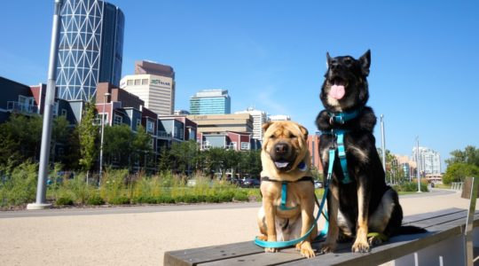 Ty and Buster - Calgary, AB