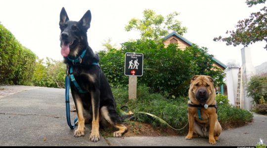 Buster and Ty - Bainbridge Island, WA