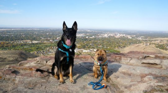 Buster and Ty at Table Rock - Boise, ID