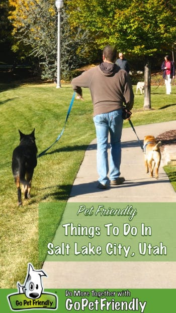 Man walking a Shar-pei and a German Shepherd dog in a pet friendly park in Salt Lake City, UT