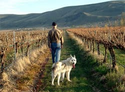 Sleeping Dog Winery - Yakima Valley, WA
