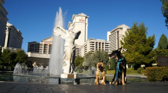Buster and Ty  - Las Vegas, NV