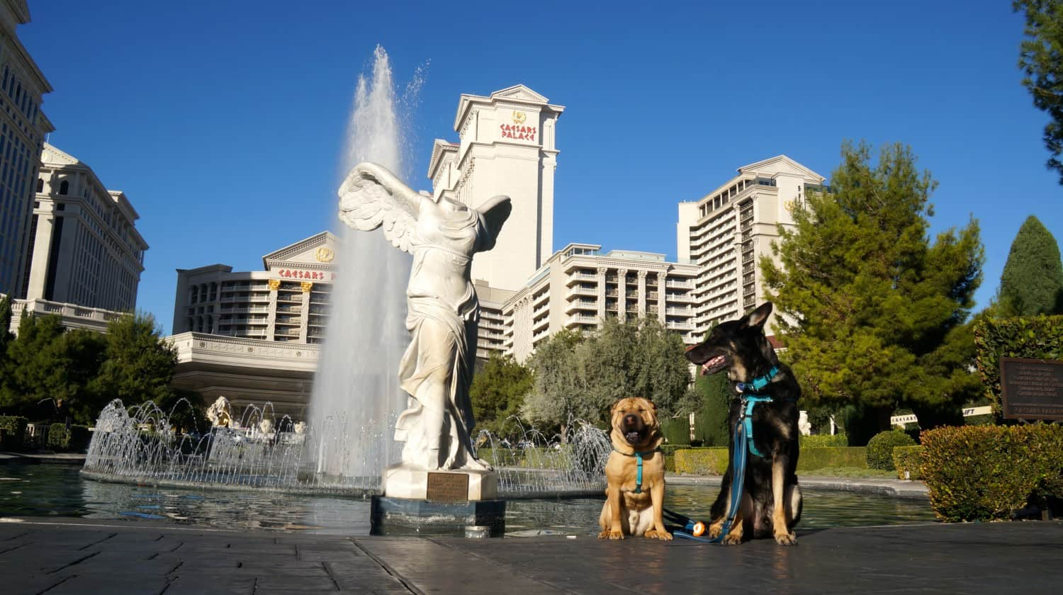 Taking Your Dogs to Vegas ... Is It a Good Bet?
