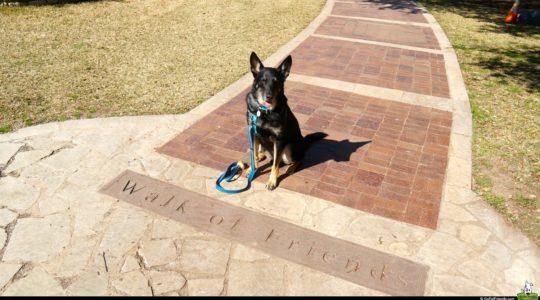 Buster at Zilker Botanical Garden - Austin, TX
