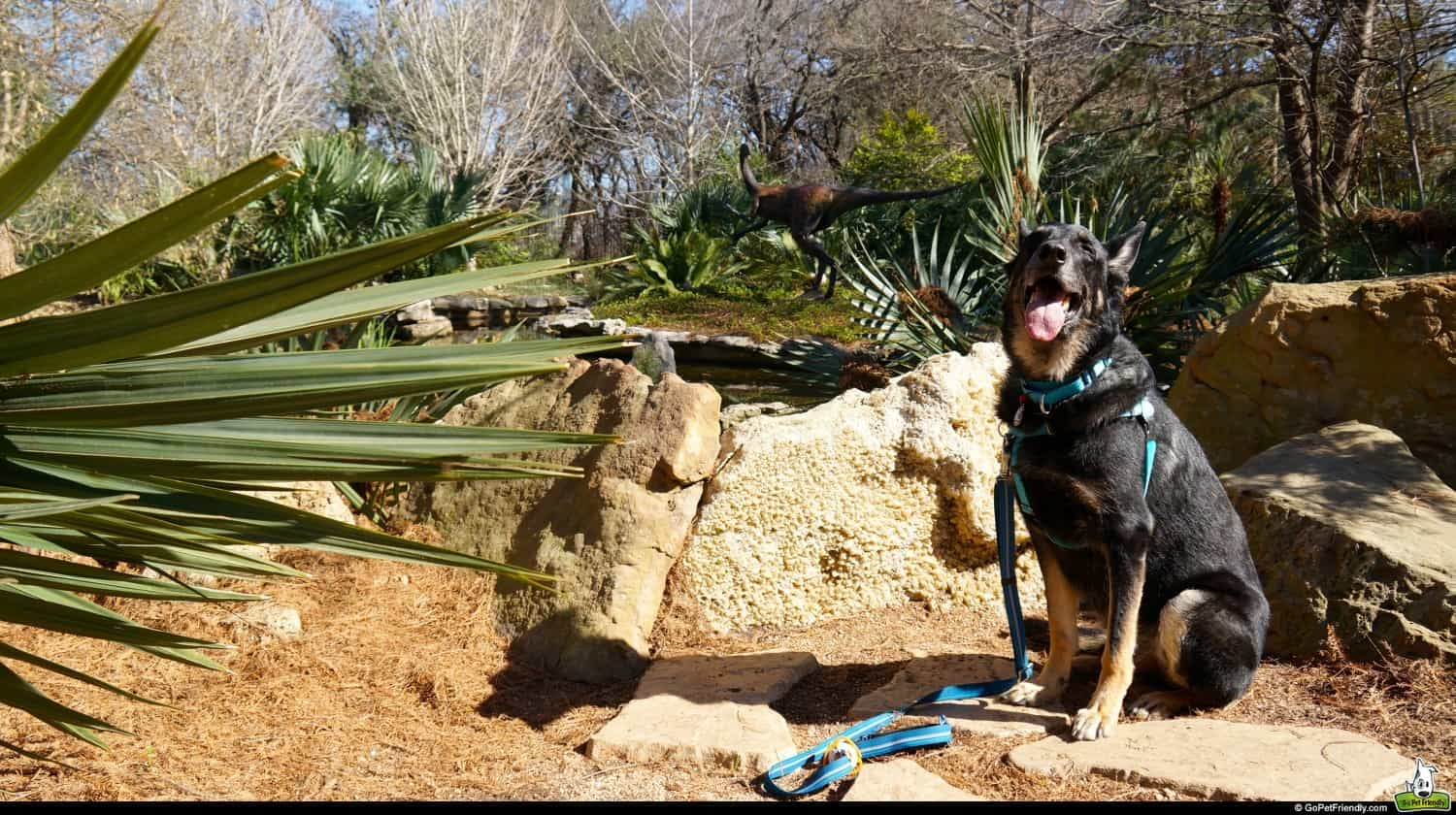 Dog Friendly: Zilker Botanical Garden in Austin