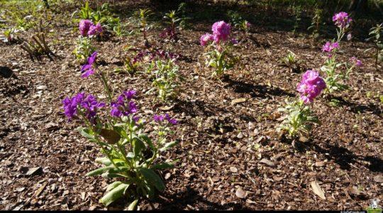 Zilker Botanical Garden - Austin, TX
