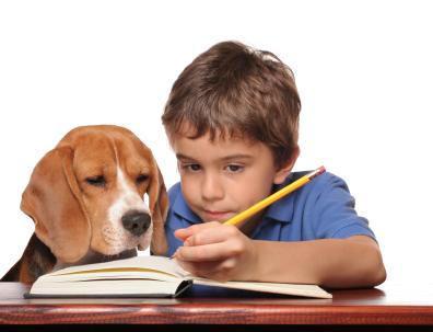 Beagle Dog and Boy