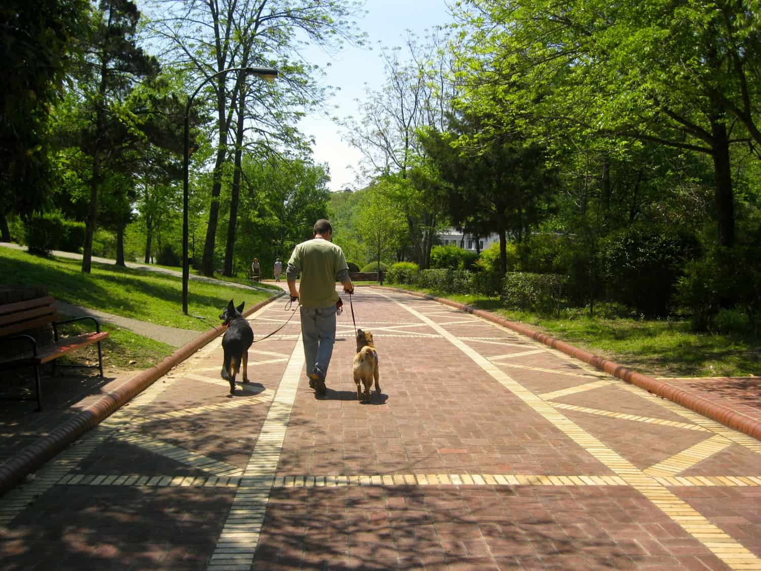 Buster the German Shepherd, Rod the human, and Ty the Shar-pei walking a brick path in dog-friendly Hot Springs National Park, Arkansas