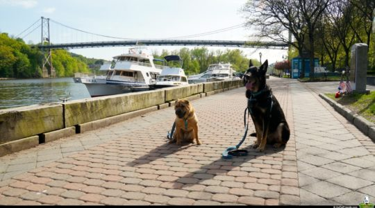 Ty and Buster in Kingston, NY
