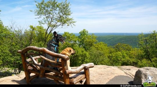 Buster & Ty on Bear Mountain - Hudson Valley, NY