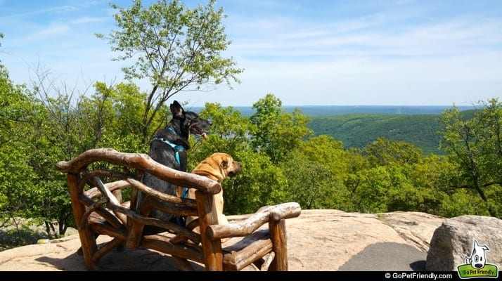9 Best Off-The-Beaten-Path Pet Friendly Trips