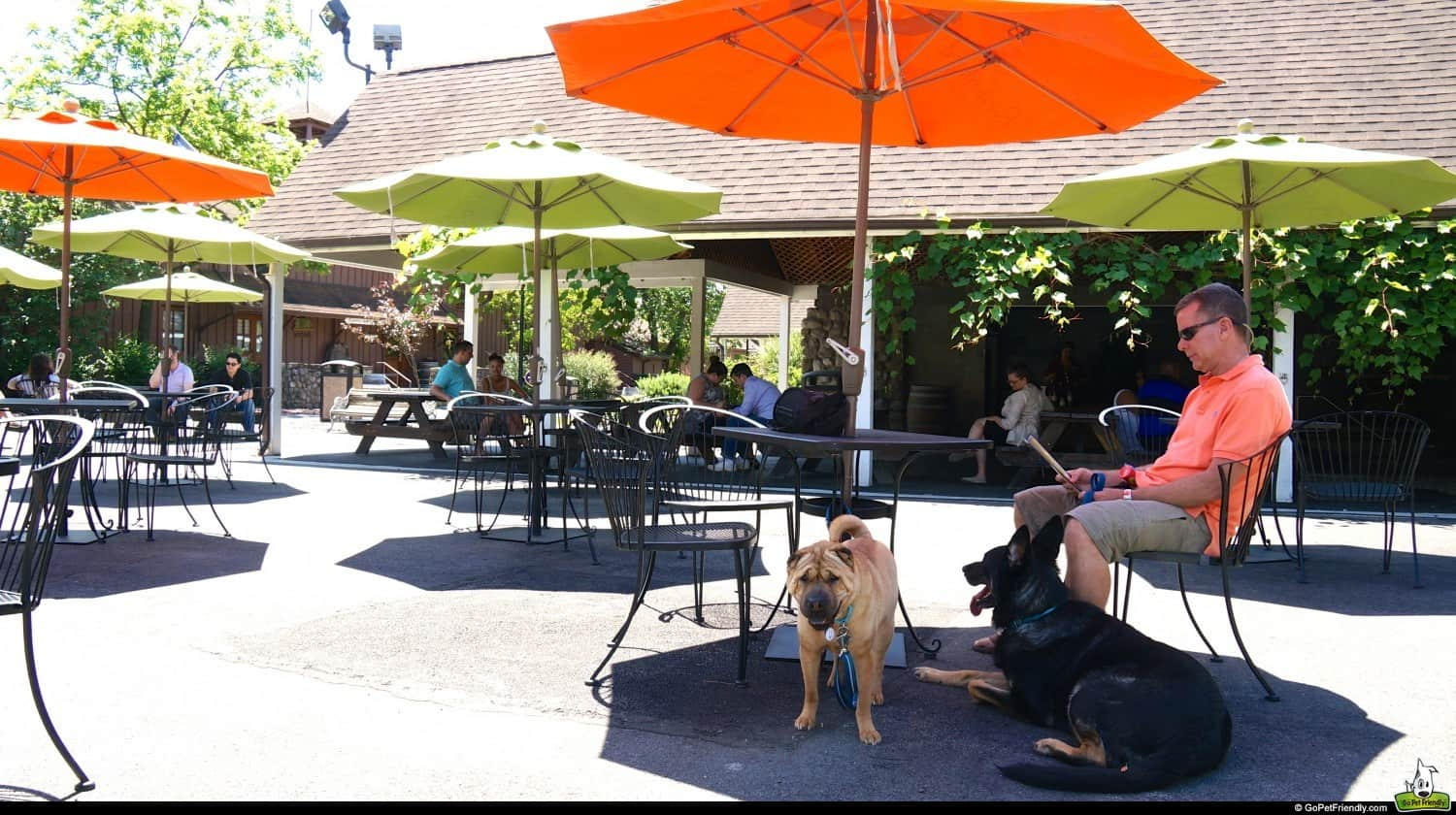 11 Pet Friendly Wineries That Are Crazy About Dogs