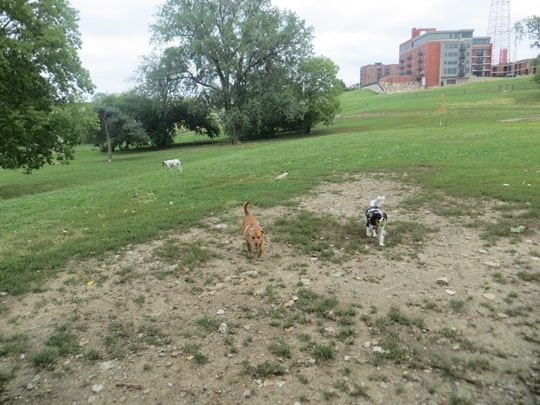 Dog Park - Kansas City, Missouri