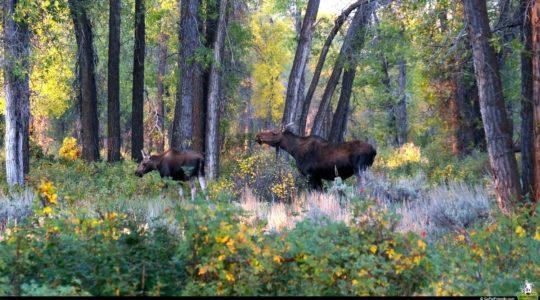 Grand Teton National Park - Jackson, WY