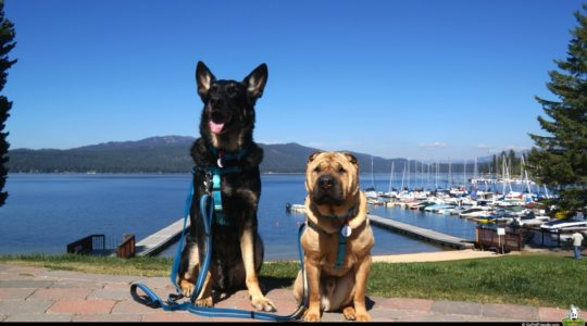 Buster and Ty in McCall, ID