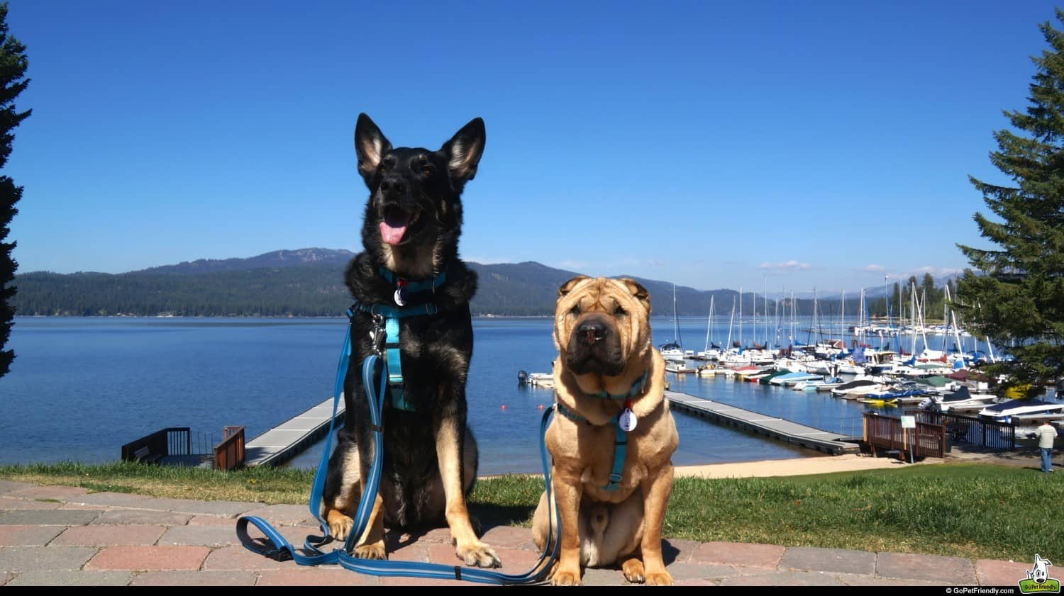 McCall, Idaho: A Dog Lover's Dream!