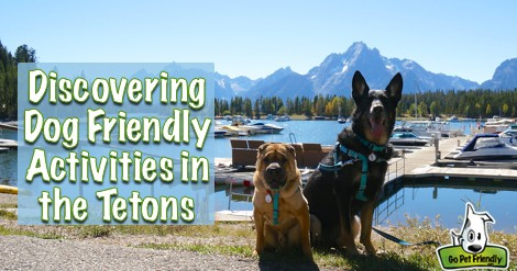 Discovering Dog Friendly Activities in the Tetons