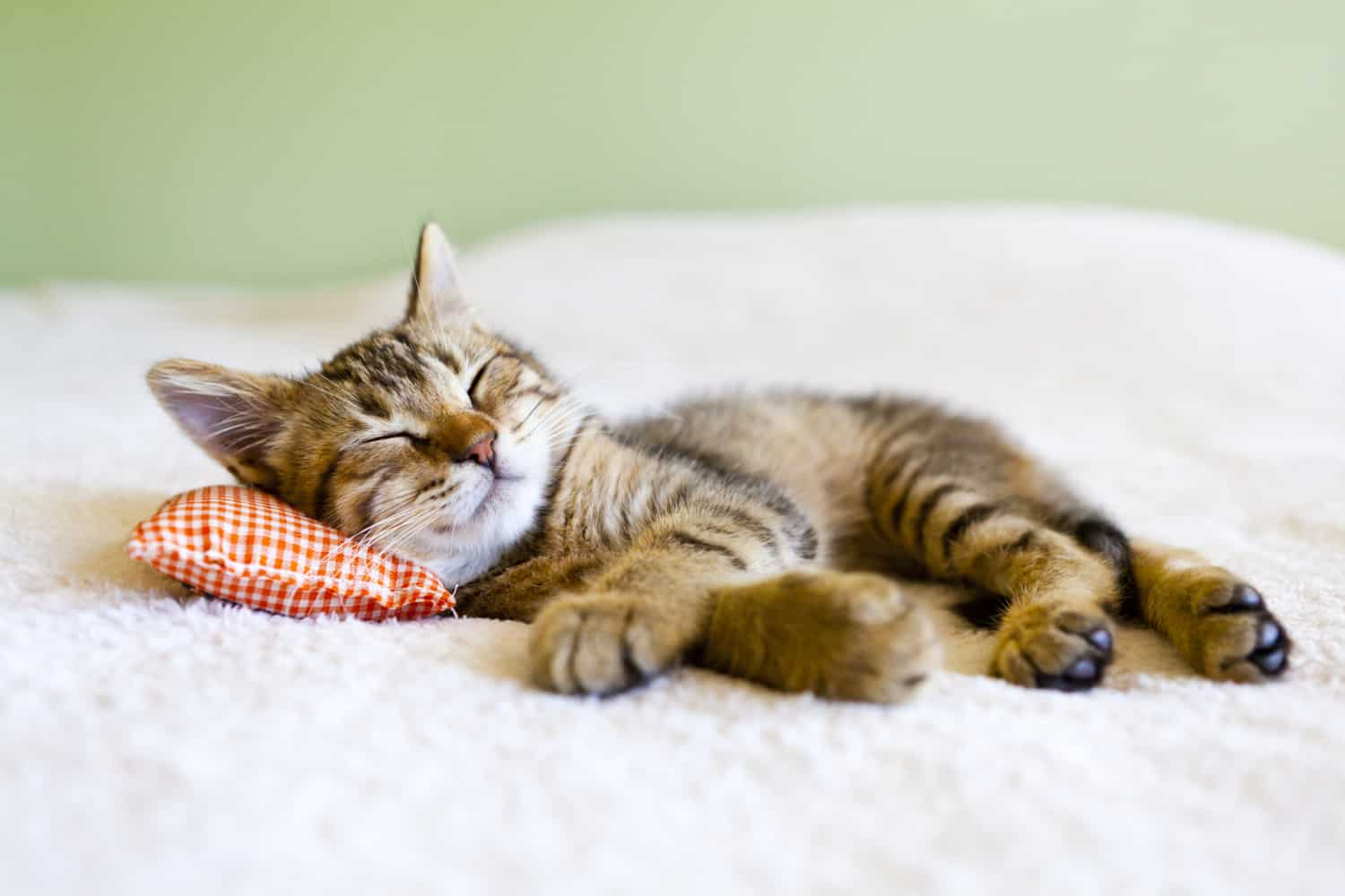 Small kitty sleeping on a pillow