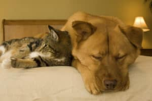 Cat and dog resting on bed in a pet friendly hotel
