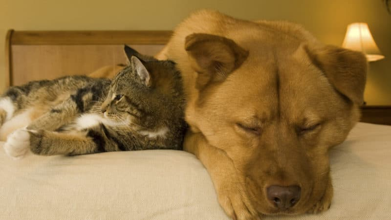 Hotel Chains Where Pets Stay Free